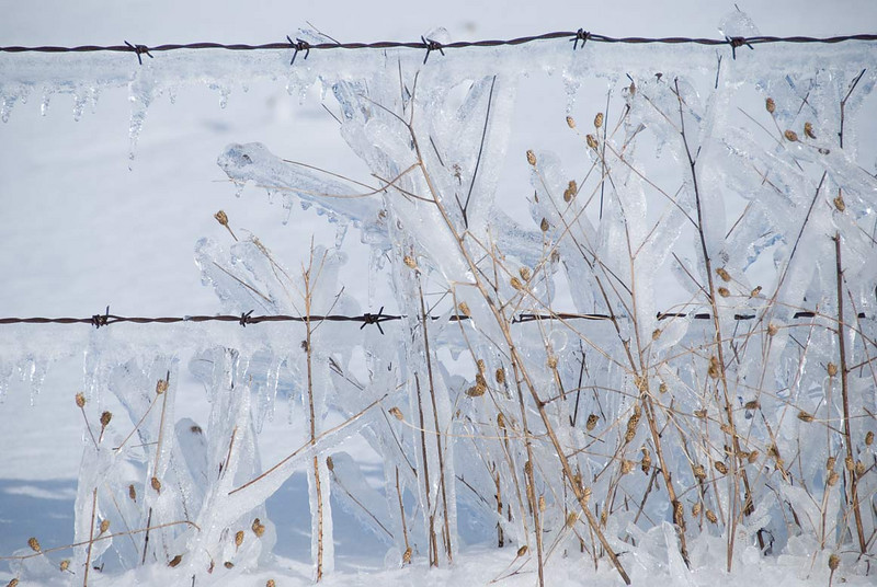 icy-fence.jpg