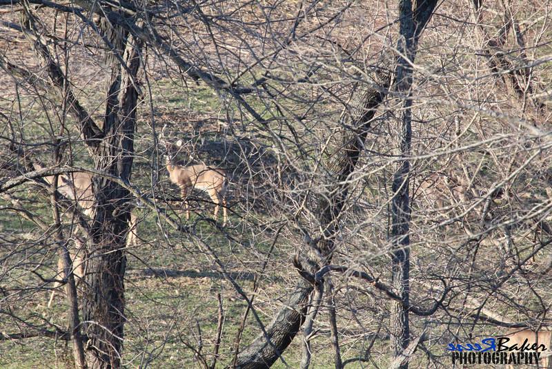 2013 Wildlife_0011.JPG