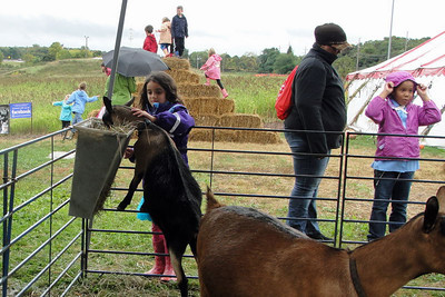 Adat Shalom Families marked Parashat Noah by learning how to care for animals at the Bowers Farm in Bloomfield Hills