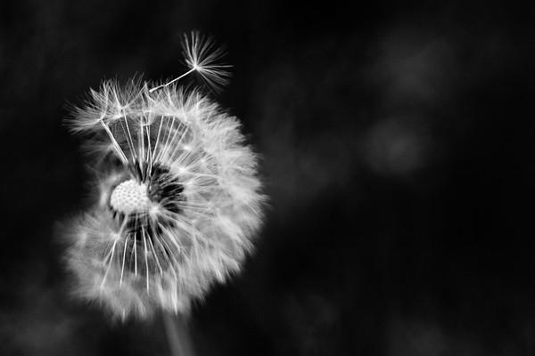 Flowers & Foliage (Black & White)