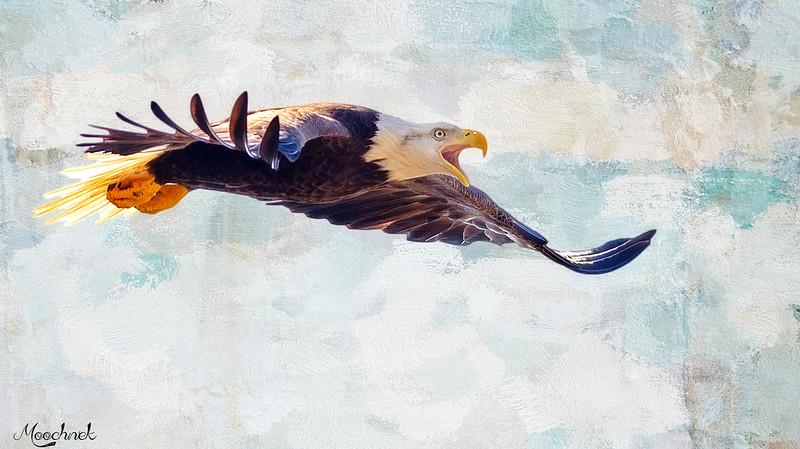 eagle_DSC9291-copy.jpg