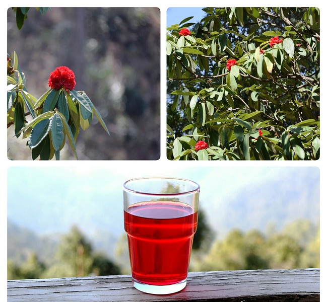 red berries on a tree and red drink in a glass