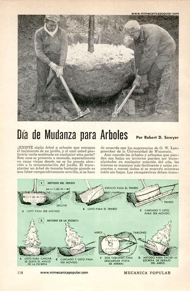 dia_de_mudanza_para_arboles_noviembre_1949-01g.jpg