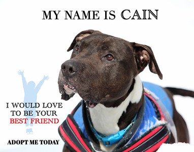 Cain - The Gentle Giant