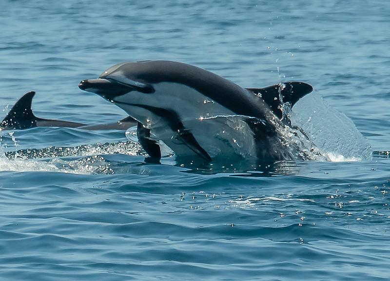 Dolphins 2018-1.jpg
