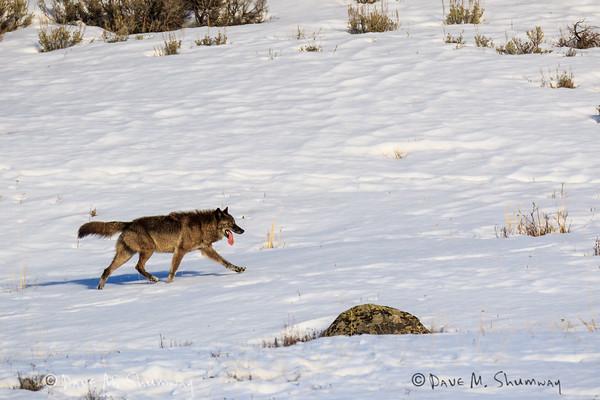 Yellowstone, February 14-16, 2015