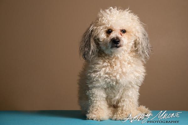 Dogs: Indoor Portraits