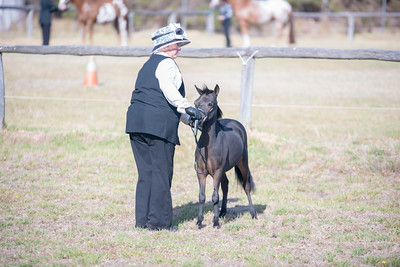 Pinjarra Equestrian Assoc. All Breed Spectacular