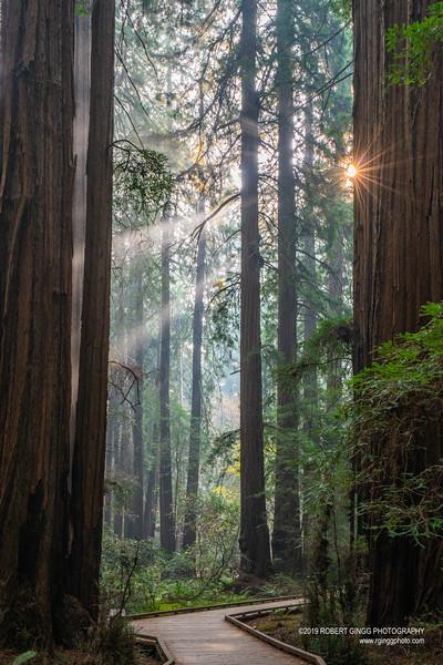 Muir Woods-7149.jpg