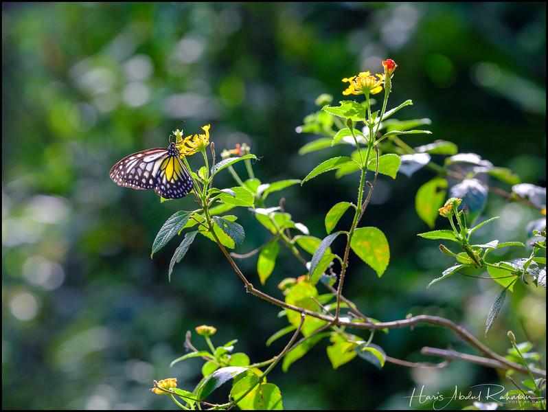 200104 KL Butterfly Park 1.jpg