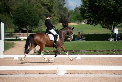 Horse 408