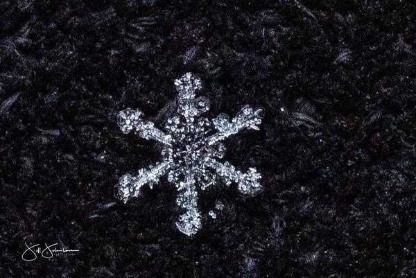 snowflakes-1416.jpg