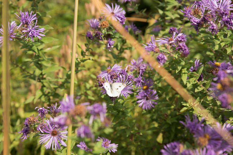 Chicago Botanic Garden 010.jpg