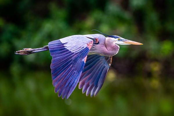 Birds - Florida