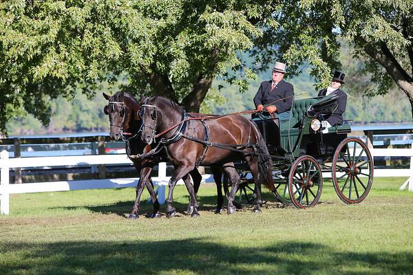 2014 VILLA LOUIS-HORSE PAIRS
