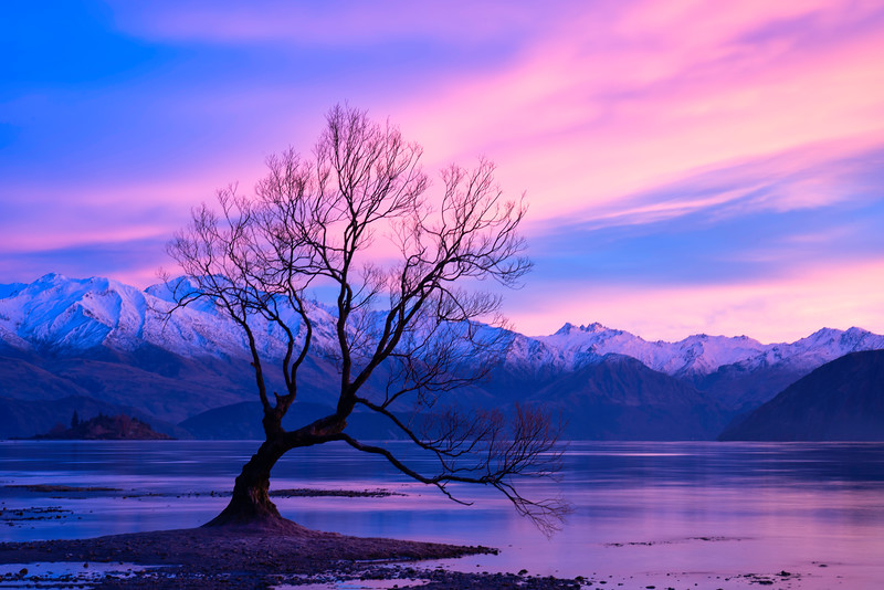 Wanaka Willow and Southern Alps