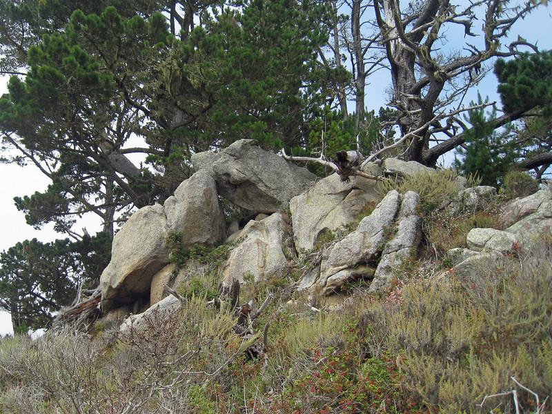 Point Lobos 8:2009 23.jpg