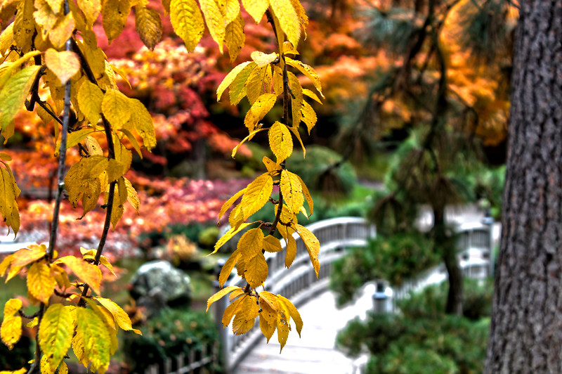 Japanese_Gardens_HDR3.jpg