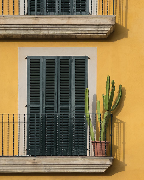 cactus on yellow; palma de mallorca