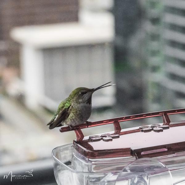 2021 - The Hummingbird Chronicles-2267_edit-2.jpg