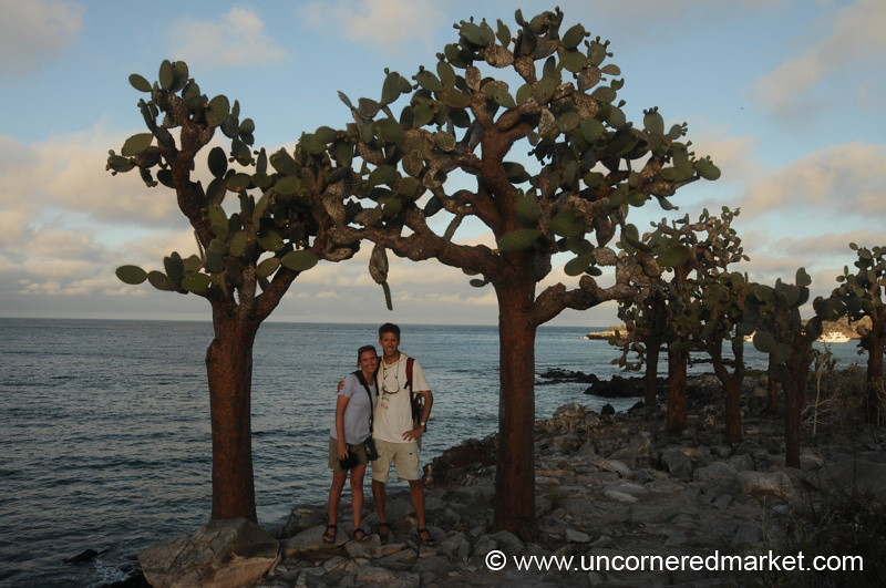 Under the Opuntia - Galapagos Islands