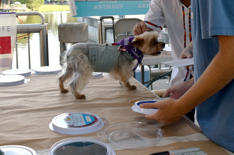 2016 Volusia Co Bark For Life (6).JPG