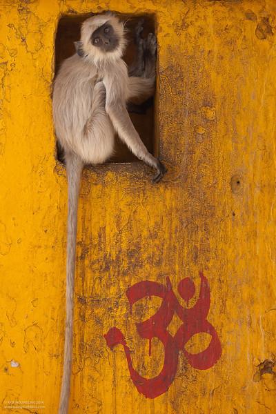 Monkey Orange Om