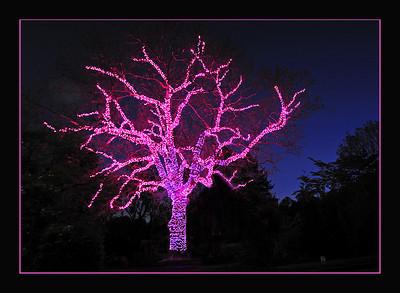 The Casey Tree (Dec. 22, 2009)