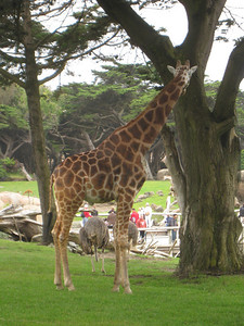San Francisco Zoo with Isabella
