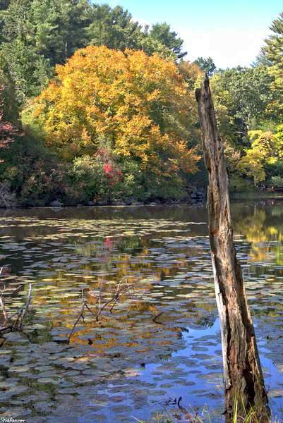 Ipswich River Wildlife Sanctuary, Massachusetts, 10/14/2019 This work is licensed under a Creative Commons Attribution- NonCommercial 4.0 International License.