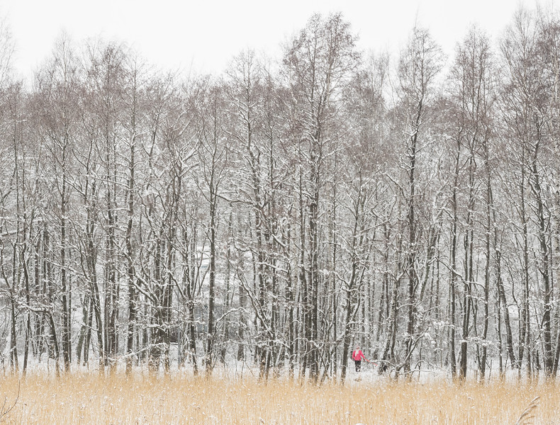 Woods_Finland-3.jpg