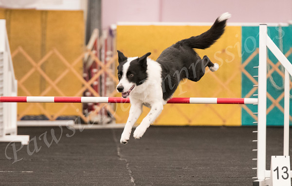 All Open Classes from AKC Agility Trial SMACCM Fri 4 27 18