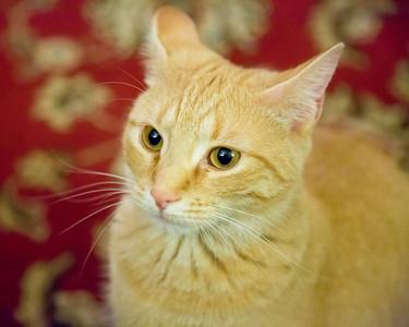 New Camera/Cats