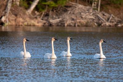May 9, 2021 - Dunning Lake
