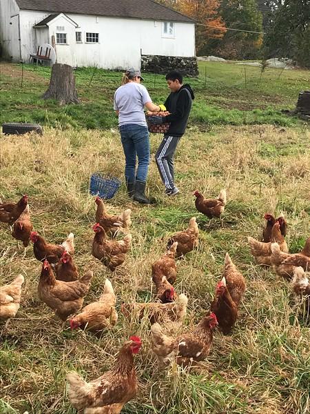 True Love Farm