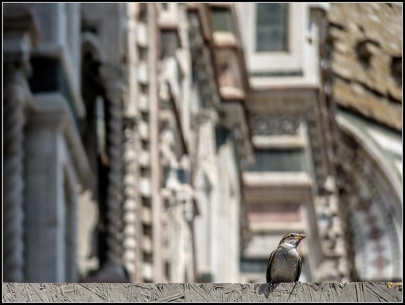 2010-08-Firenze-C264.jpg