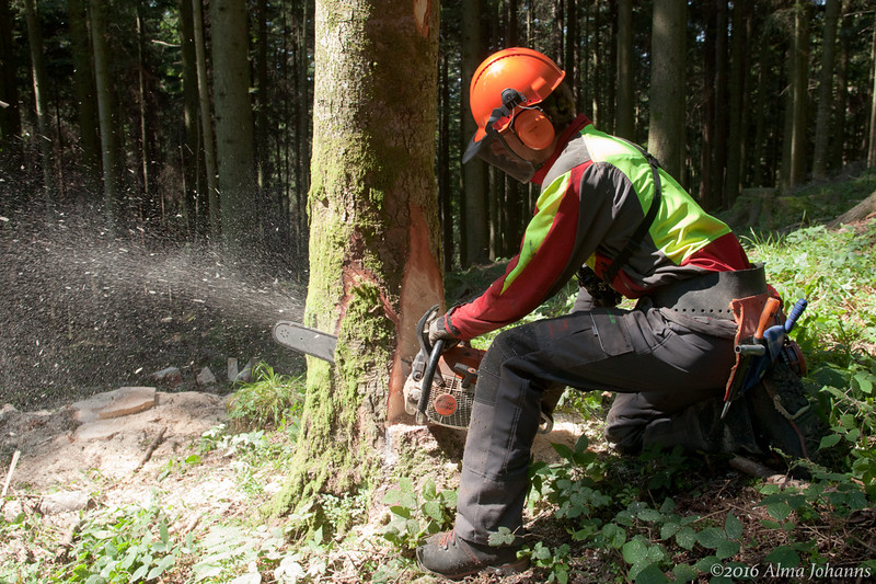 Suva - Waldarbeit