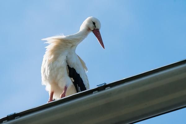 180527 mehr Storch