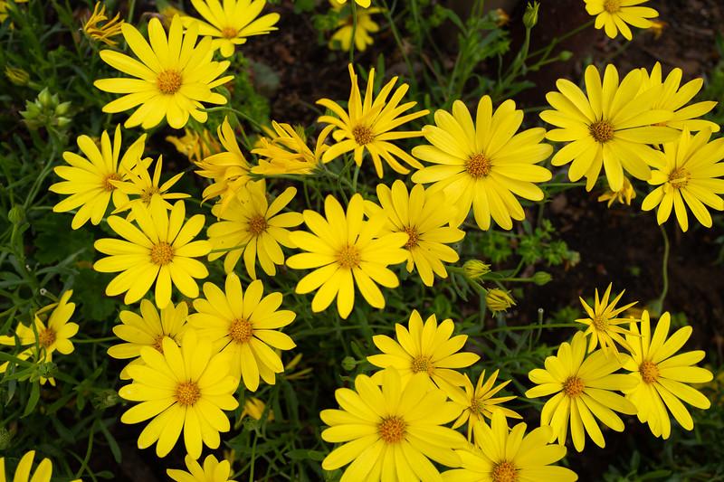 Spring Flowers A-276.jpg