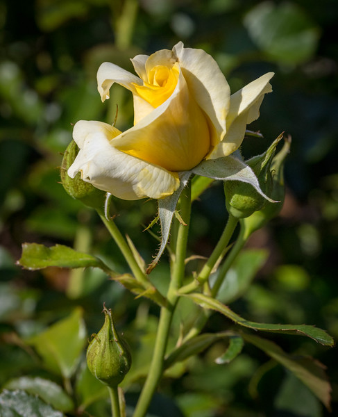 Rose Garden 8.2018-0761.jpg