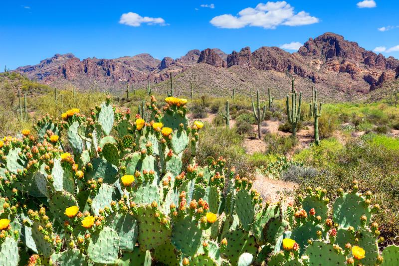 6695 Blooming Desert