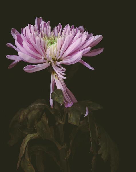 FlowerMacro00010.jpg