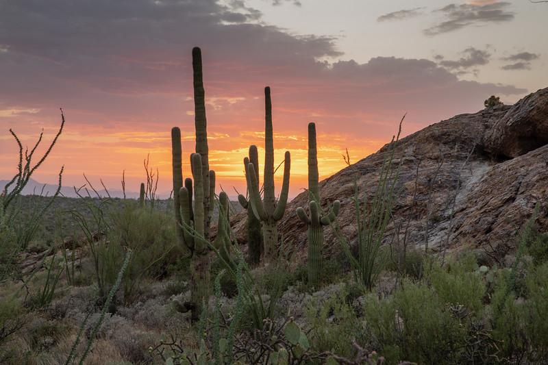 WVWS_Saguaro Cactus-4459.jpg