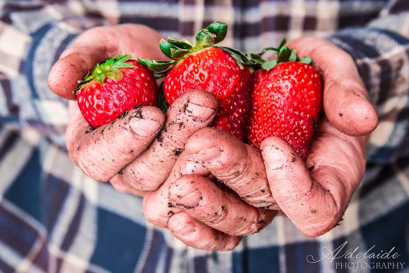 Strawberries.jpg