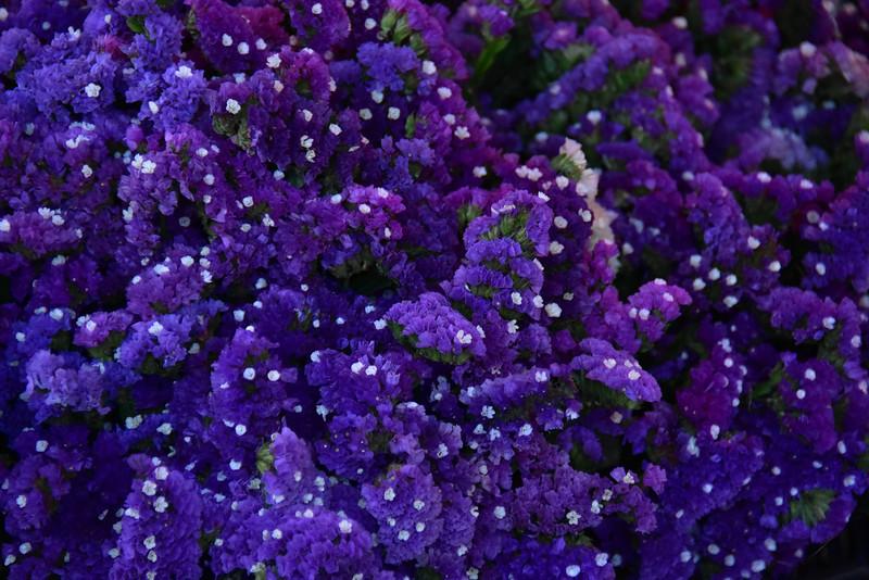 2016 valdivia purple flowers ms best .jpg