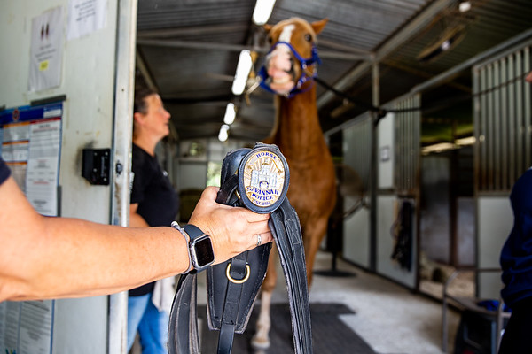 Retirement of Savannah Police Horse Sgt.Lee