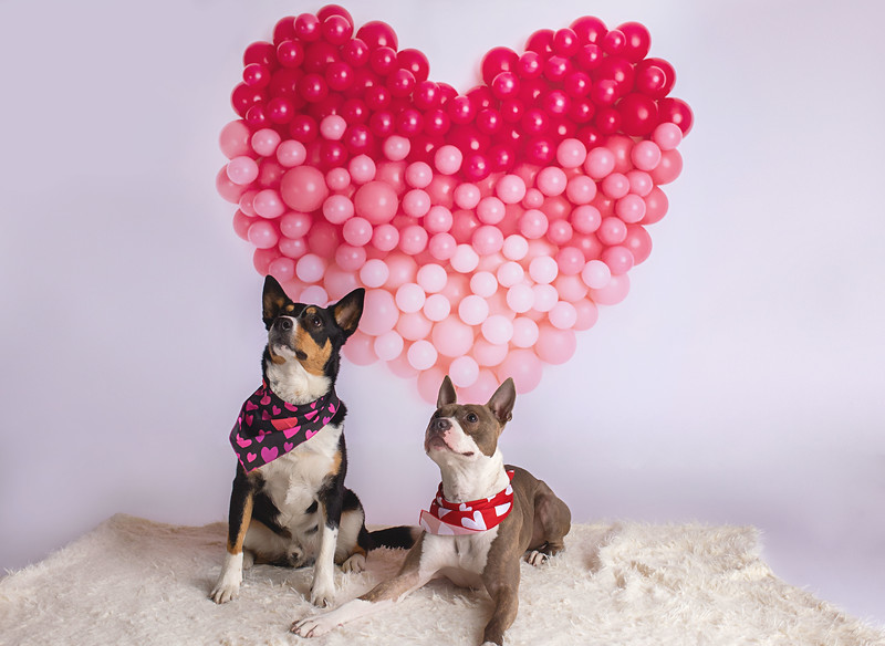 Valentines Day Pet Portraits for the D.A.C.C