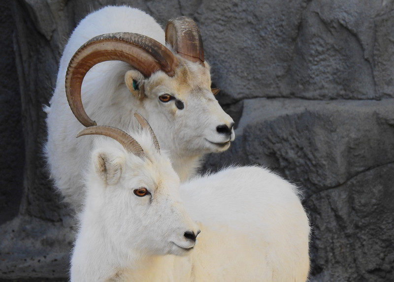 Denver Zoo 2018 (3552).JPG