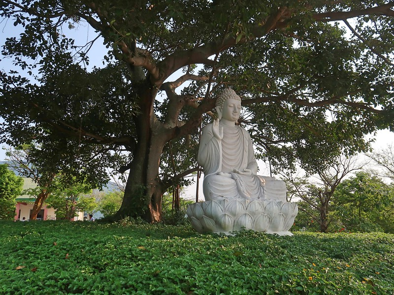 IMG_3406-buddha-under-the-tree.jpg