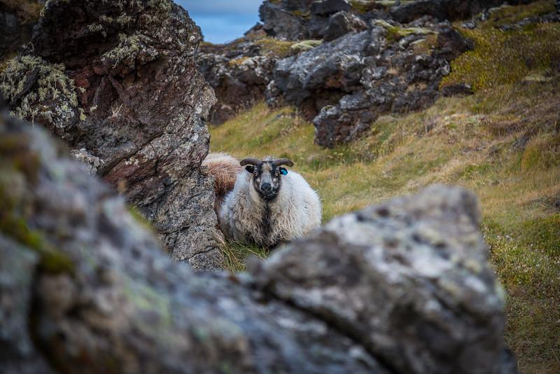 9804-Iceland-Paul-Hamill.jpg